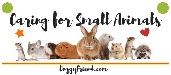 Caring for Small Mammals